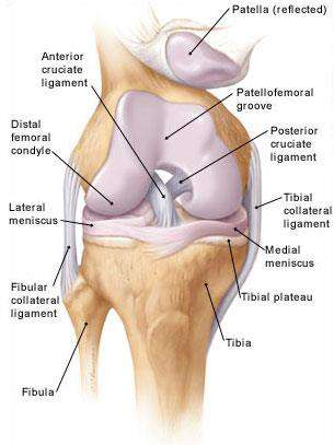 Anterior Cruciate Ligament Injury Knee Surgery Mr Jonathan Webb